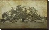 Sugarmill Oak, Louisiana Bedruckte aufgespannte Leinwand von William Guion