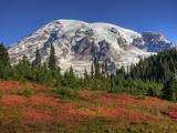 Paradise Valley and Mt. Rainier, Mt. Rainier National Park, Washington, Usa Reproduction photographique par Jamie & Judy Wild
