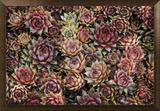 Suculentas Impressão em tela emoldurada por David Winston