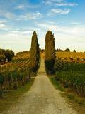 Late Summer Wine Scene in the Hills of Panzano, Tuscany, Italy Fotoprint van Richard Duval