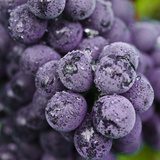 Chianti Grapes Ready for Harvest, Greve, Tuscany, Italy Fotoprint van Richard Duval