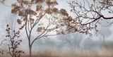 Early Morning Mist II Posters af John Seba