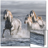 Horses Running at the Beach Poster van  Llovet
