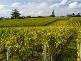 Vineyards, St. Emilion, Gironde, France, Europe Lámina fotográfica por Robert Cundy