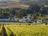 Zorgvliet Wine Estate, Stellenbosch, Cape Province, South Africa, Africa Fotografisk tryk af Sergio Pitamitz