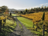 Vineyard, Havelock North, Hawke's Bay, North Island, New Zealand, Pacific Photographic Print by Jochen Schlenker