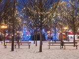 Christmas Decoration at Old Town Square's Park at Twilight, Stare Mesto, Prague, Czech Republic Photographic Print by Richard Nebesky