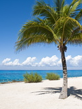 Beach at Chankanaab Park, Isla De Cozumel, Cozumel, Off the Yucatan, Mexico Stretched Canvas Print by Michael DeFreitas