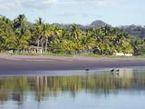 Vultures on the Beach at Playa Sihuapilapa, Pacific Coast, El Salvador, Central America Reproduction photographique par Christian Kober