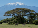 Zebra, Amboseli National Park, With Mount Kilimanjaro in the Background, Kenya, East Africa, Africa Reproduction photographique par Charles Bowman