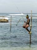 Traditional Stilt Fisherman, Koggala, Near Weligama, South Coast of Sri Lanka, Asia Photographic Print