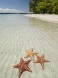 Starfish Beach, Bocas Del Drago, Isla Colon, Bocas Del Toro, Panama, Central America Lámina fotográfica