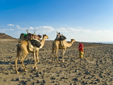 Afar Tribeswoman With Camels on Her Way Home, Near Lac Abbe, Republic of Djibouti, Africa Fotografisk tryk