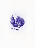 Eichhörnchen Blau/Weiß Samlertryk af Albrecht Dürer