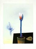 Amarillis mit Goldblatt Limited Edition av Paul Wunderlich