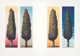 4 Zypressen, c.1999 Limited Edition by Folkert Rasch