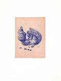 Eichhörnchen Blau/Altrosa Samlertryk af Albrecht Dürer
