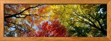 Colorful Trees in Fall, Autumn, Low Angle View Framed Photographic Print
