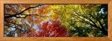 Kleurrijke bomen in de herfst van onderaf gefotografeerd Ingelijste fotodruk