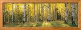 Aspen Trees in Coconino National Forest, Arizona, USA Gerahmter Fotografie-Druck