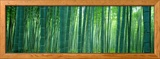 Bamboo Forest, Sagano, Kyoto, Japan Framed Photographic Print