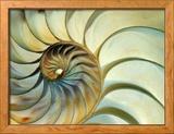 Close-up of Nautilus Shell Spirals Gerahmter Fotografie-Druck von Eric Kamp