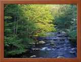 Elkmount Area, Great Smoky Mountains National Park, Tennessee, USA Framed Photographic Print by Darrell Gulin