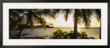 Palm Trees on the Coast, Kohala Coast, Big Island, Hawaii, USA Framed Photographic Print
