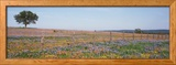Texas Bluebonnets and Indian Paintbrushes in a Field, Texas Hill Country, Texas, USA Framed Photographic Print by  Panoramic Images