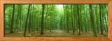 Pathway Through Forest, Mastatten, Germany Gerahmter Fotografie-Druck