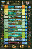 Eras of Life Geology Educational Science Chart Poster 高品質プリント