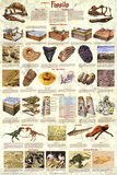 Laminated Introduction to Fossils Paleontology Educational Science Chart Poster Plakater