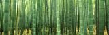 Japan (Bamboo Forest) Fotografía