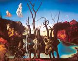 Zwanen met olifanten als spiegelbeeld in het water, ca.1937 Print van Salvador Dalí
