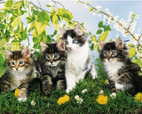 Cute Cats (4 Kittens) Art Poster Print Poster