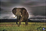 African Majesty, Save Our Planet (Elephant) Art Poster Print Poster