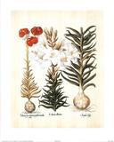 Lilium II (Flowers) Art Print Poster Posters