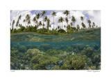 Reef Scenic Split Image Giclee-trykk av  Jones-Shimlock