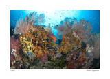 Reef Scenic 4 Giclee-trykk av  Jones-Shimlock