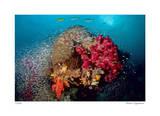 Reef Scenic 5 Giclee-trykk av  Jones-Shimlock