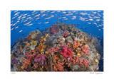 Reef Scenic 6 Giclee-trykk av  Jones-Shimlock