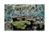 Reef Crest Reflection Giclee-trykk av  Jones-Shimlock
