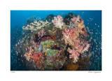 Reef Scenic 2 Giclee-trykk av  Jones-Shimlock