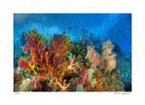 Reef Scenic 3 Giclee-trykk av  Jones-Shimlock