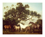 Mares and Foals Premium Giclée-tryk af George Stubbs