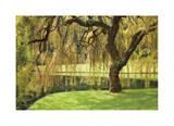 Bainbridge Island Willow Giclee Print by Donald Paulson