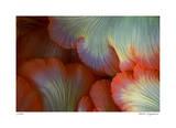 Sea Anemone Giclee-trykk av  Jones-Shimlock