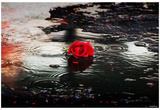 Red Rose (Rain, Puddle) Art Poster Print Láminas