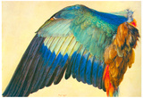 Albrecht Durer Wing of a Blaurake Art Print Poster Photo