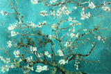 Vincent Van Gogh Turquoise Almond Branches in Bloom, San Remy Art Poster Print Foto